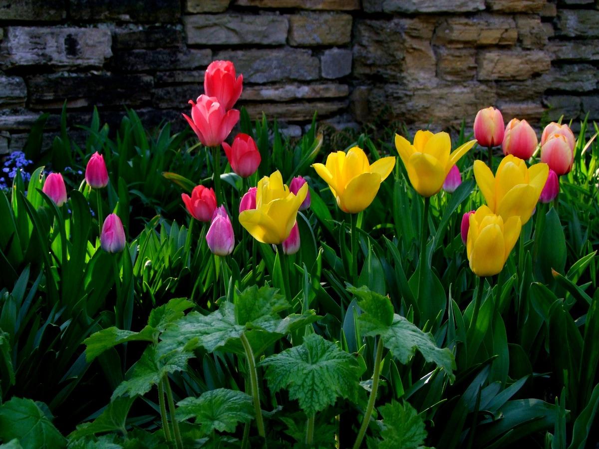 flower blossom for backyard ideas