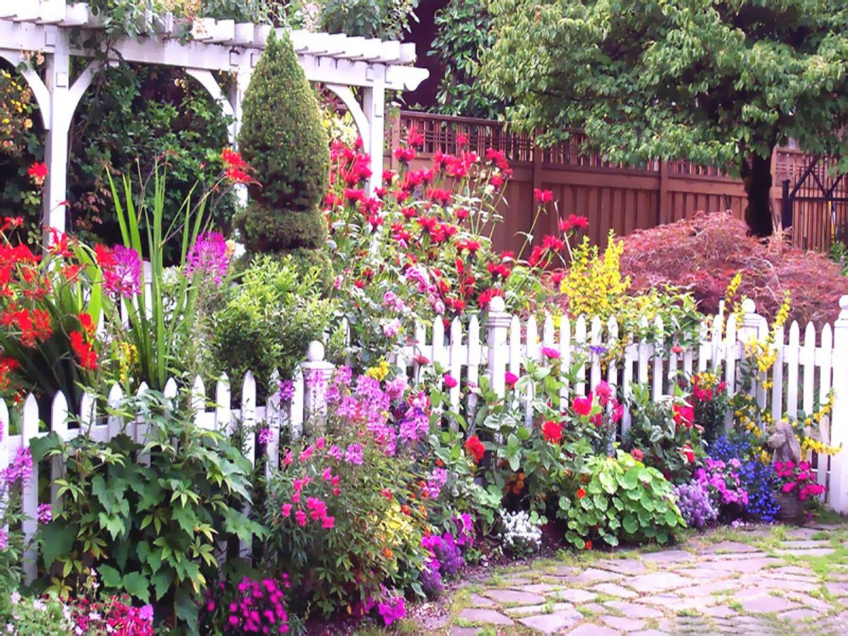 cottage garden ideas - garden flowering