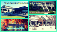 Best Trees for Front Yard Landscaping