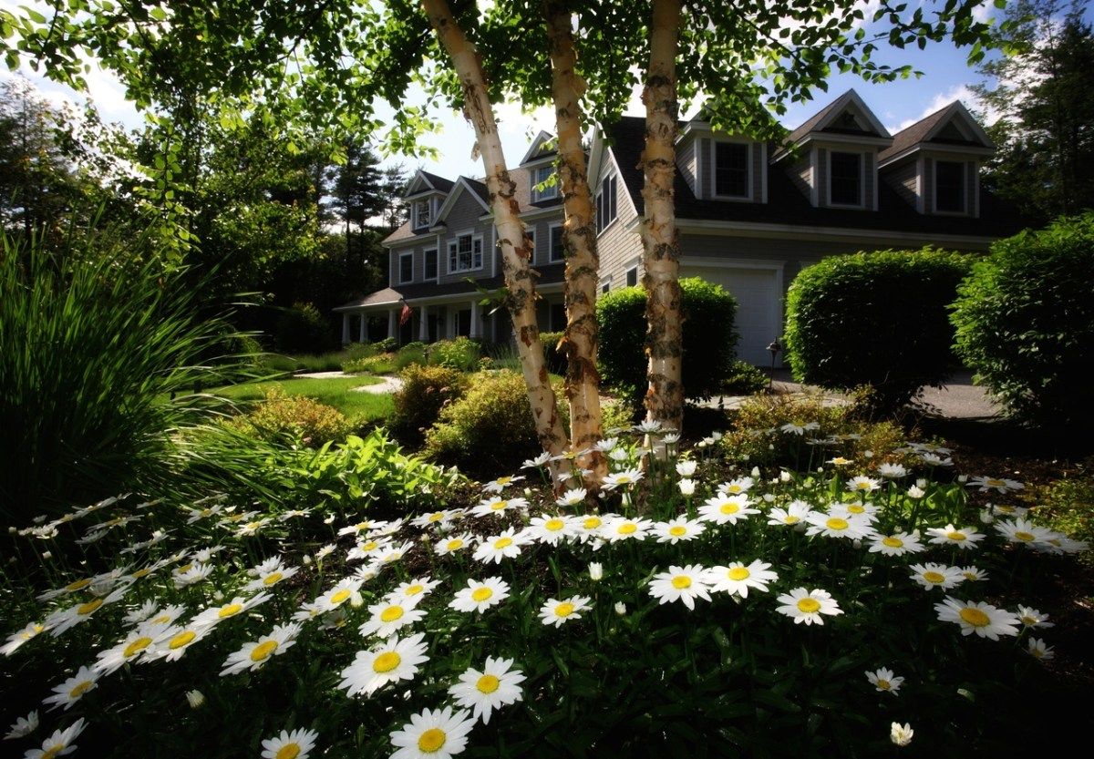 landscaping ideas around trees on hill