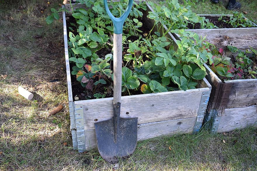 cultivation grow garden summer self catering vegetable green seed harvest