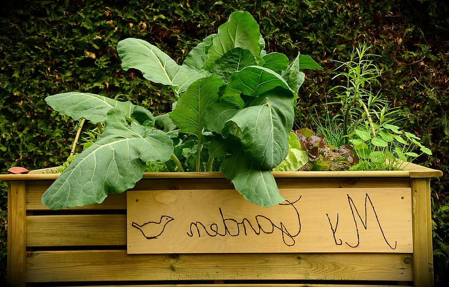 garden raised bed bed plant grow vegetables yourself healthy kohl fresh gardening