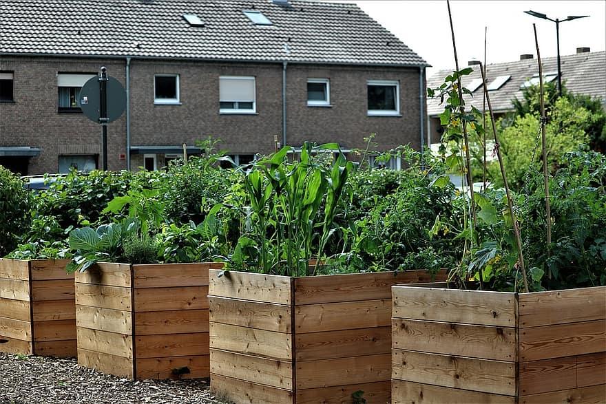 garden vegetables cultivation raised bed bed food fresh nutrition harvest