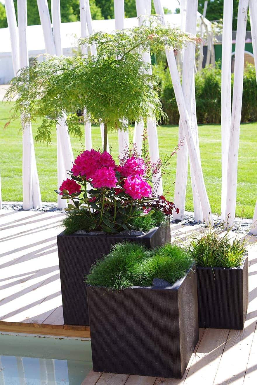japanese maple terrace planters