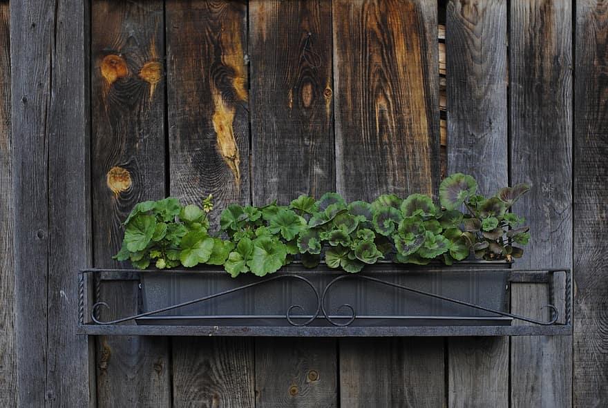 plant planter rustic flower box wooden