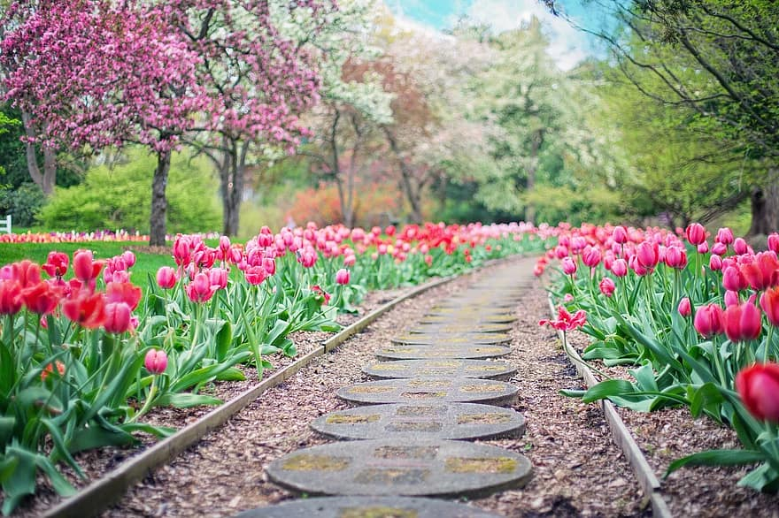 pathway path pink tulips tulips spring springtime landscape garden walkway