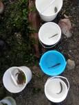 buckets of fish