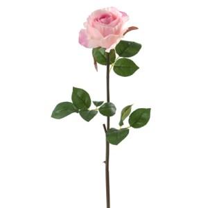 Rose bouton - rose
