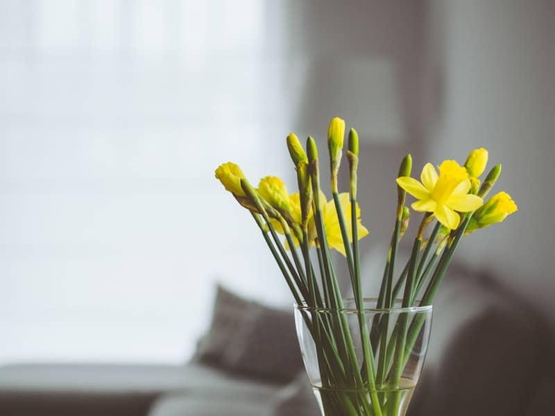 Beautiful yellow flowers inside a glass vase