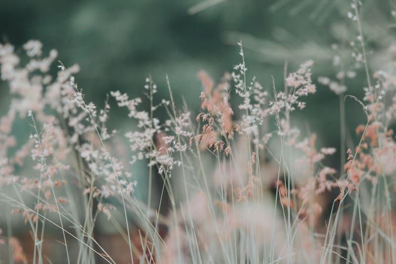 flora-flowers-grass-nature