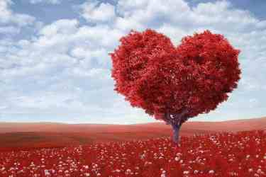 Red tree in a shape of a Heart
