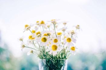 flower wallpapers