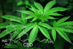 10 Companies Doing Amazing Things in Medical Cannabis and CBD