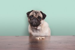 Best CBD Dog Treats For Anxiety