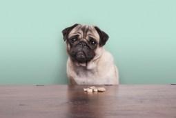Best CBD Dog Treats For Anxiety