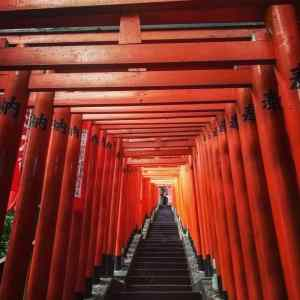 Torii poortjes bij een shinto schrijn