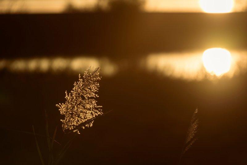 Fougère mystique au soleil levant