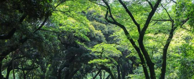 Les arbres et l'humain