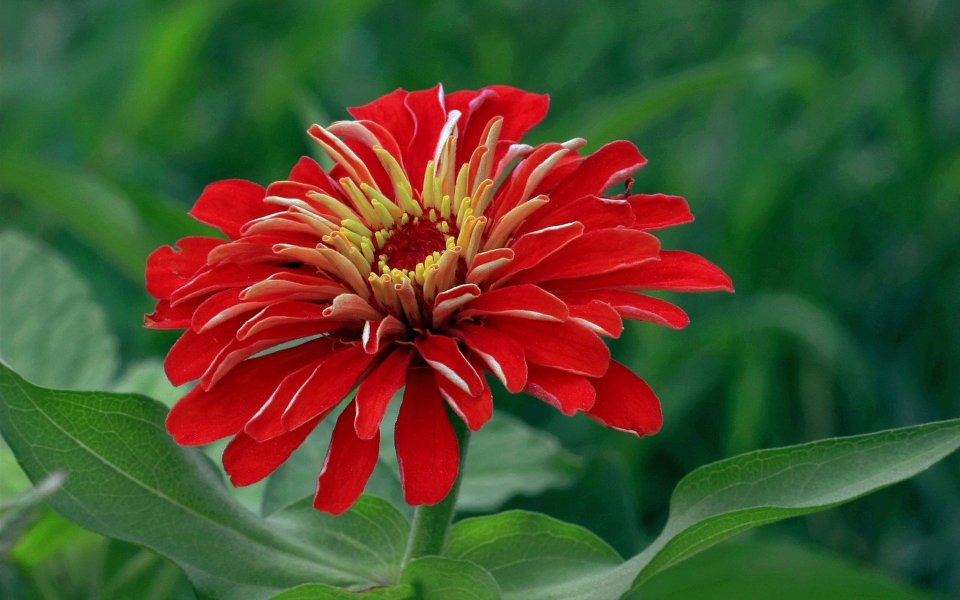 45 Pretty Flowers in the World with the Names and Pictures