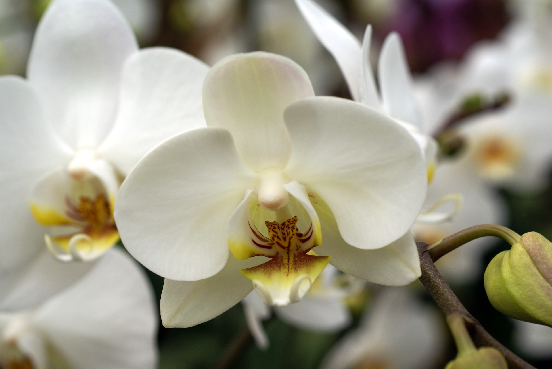 How To Care For Orchids Flower  InspirationSeekcom