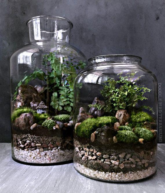 Indoor Plant Aquarium