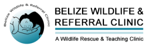 Belize Wildlife Clinic