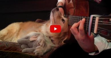 dog loves guitar