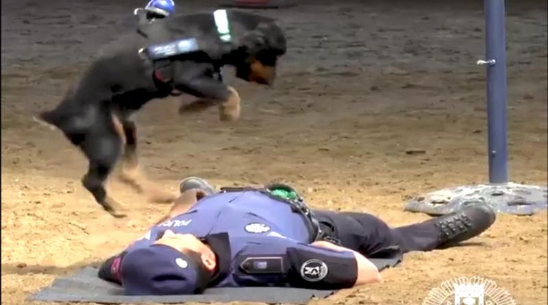 dog performs cpr on a human
