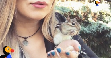 Wild Chipmunk Chooses Nicest Lady To Be His New BFF