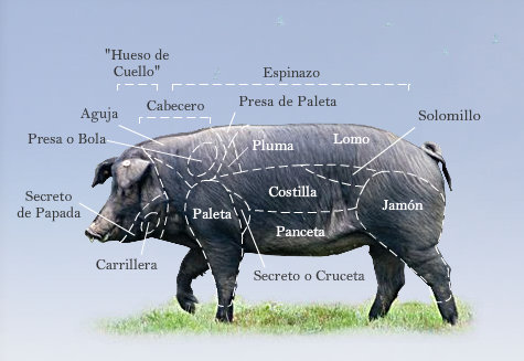 iberico-pig-meat-map