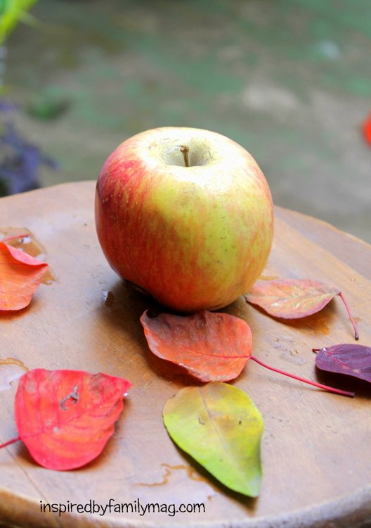 Fall Apples Apple cider