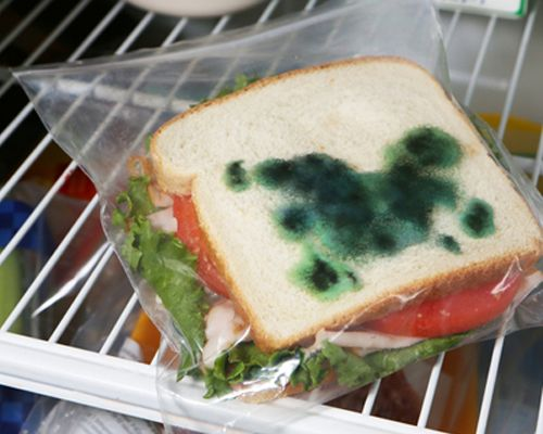 mold on sandwich bags
