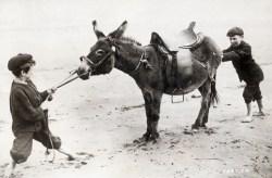 Stubborn as a mule.