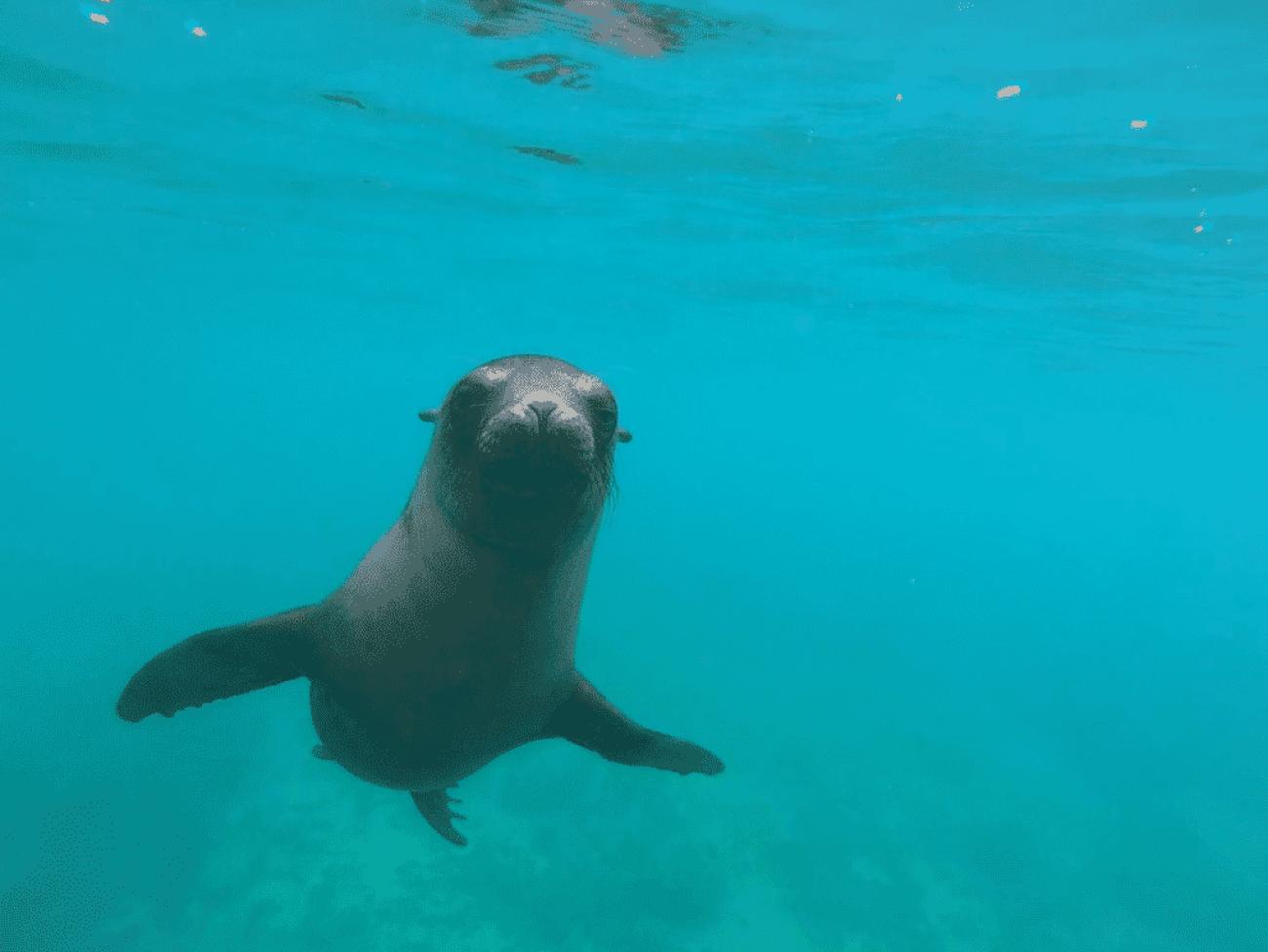 Galápagos sea lion #thatonetimewhen