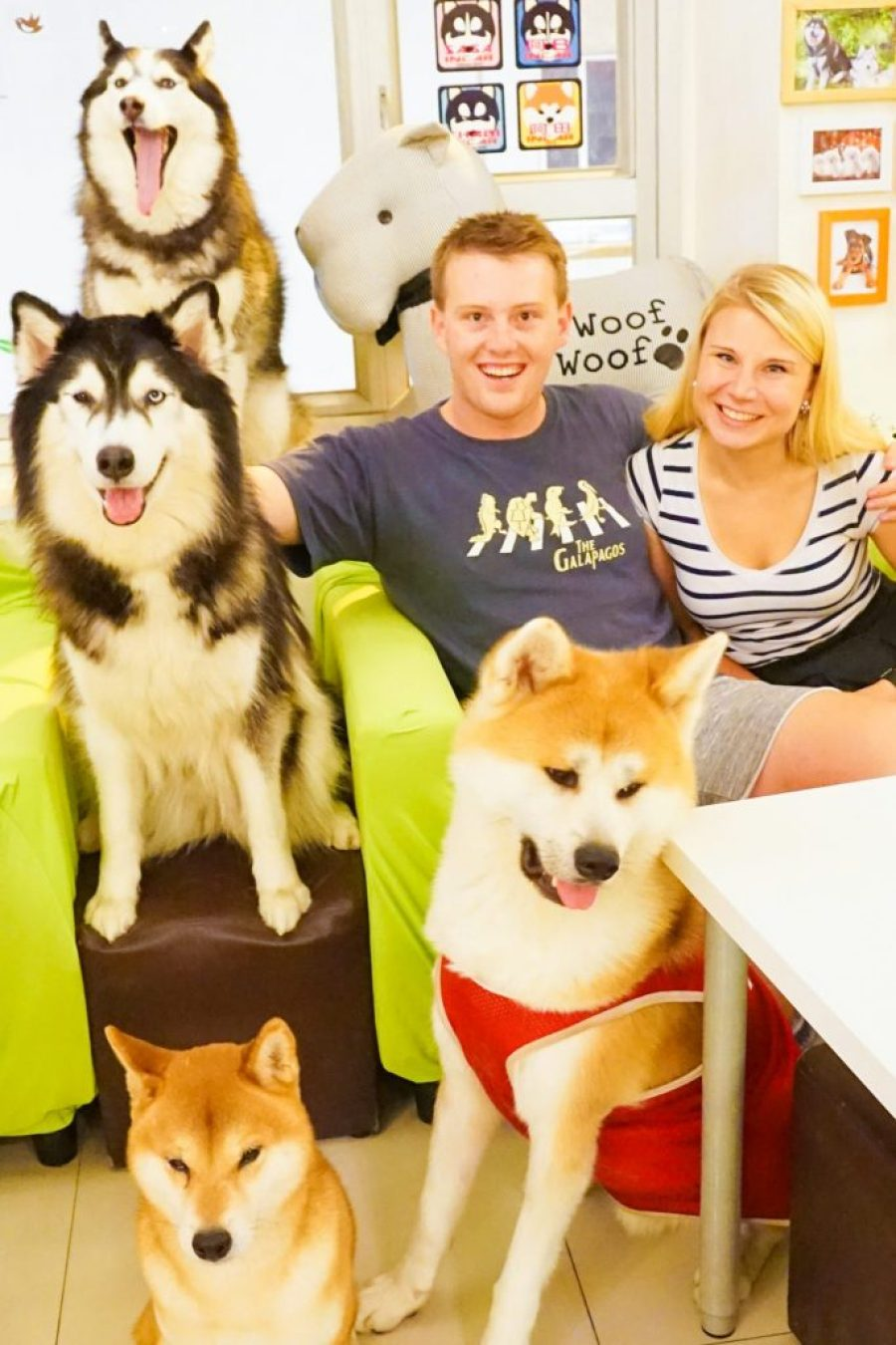 Cute Dogs in Hong Kong Dog Cafe