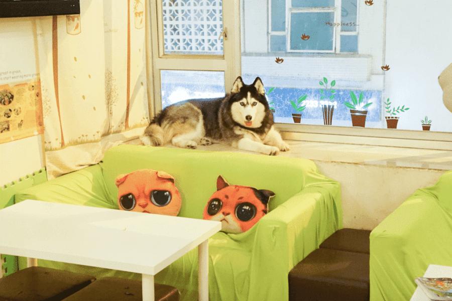 Dog Cafe Hong Kong