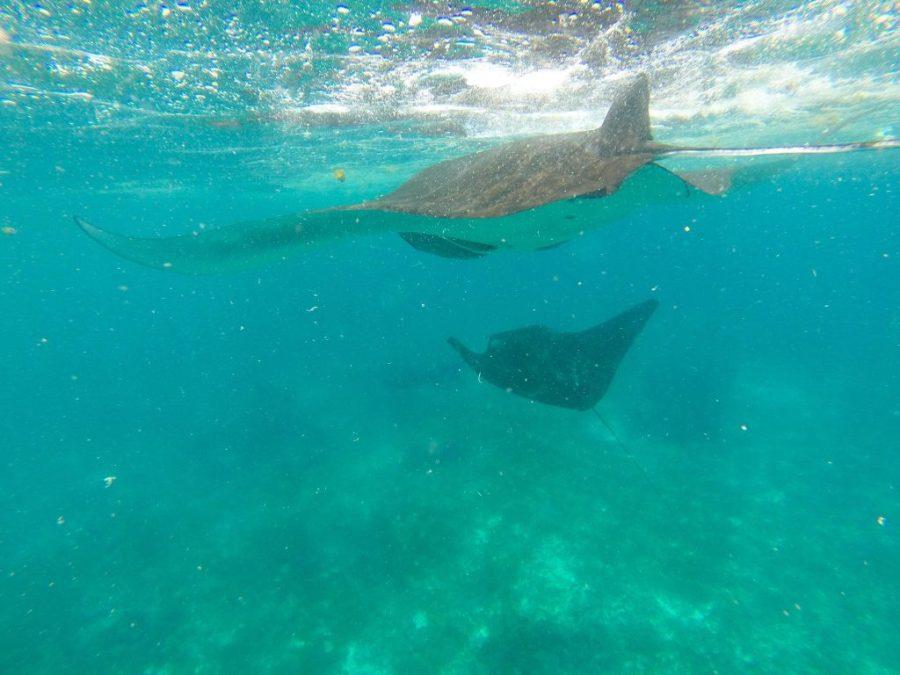 where to dive with manta rays - Komodo Islands Manta Ray Dive