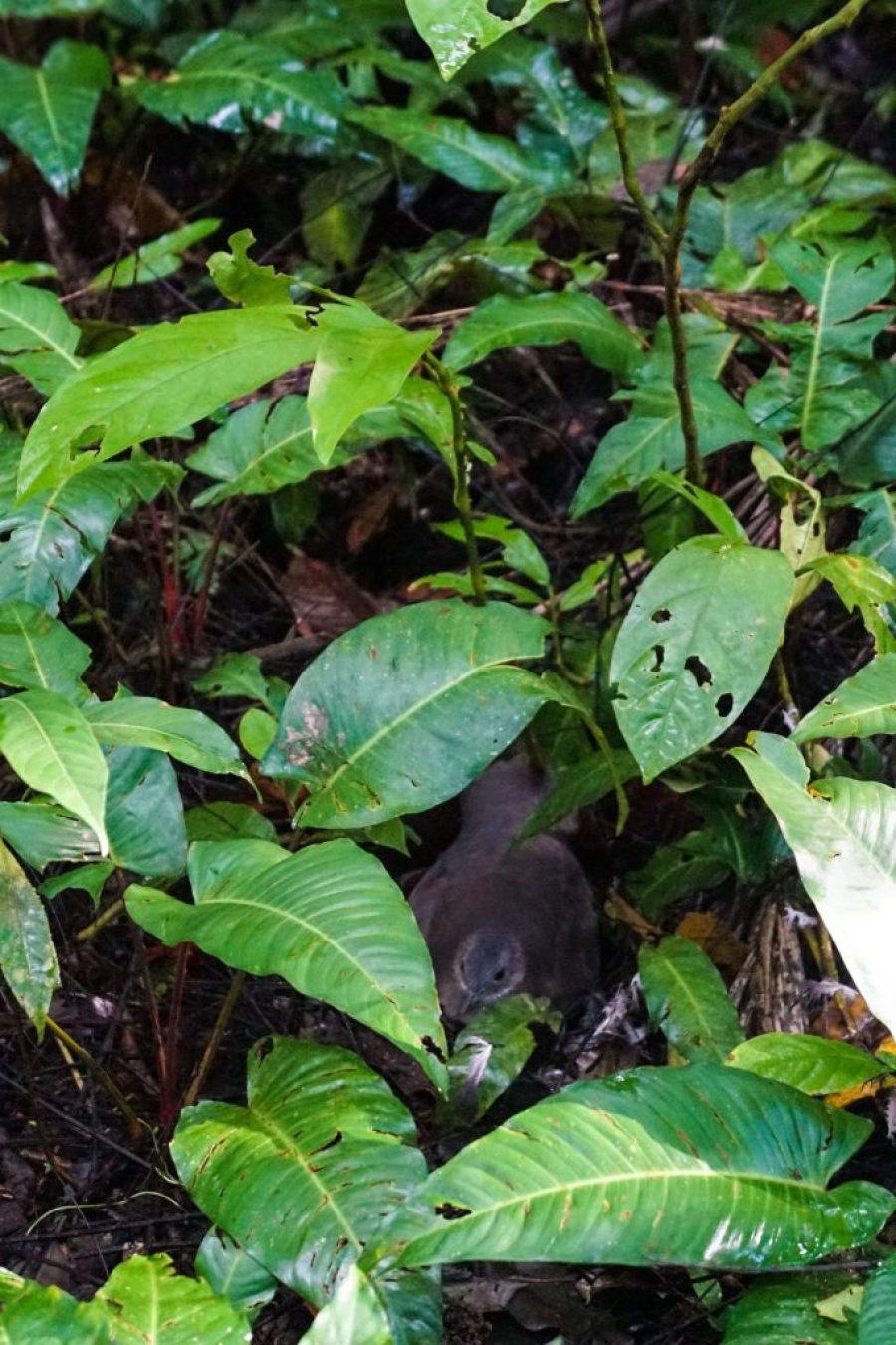 Sani Lodge Ecuador: A Amazon rainforest lodge in the Yasuni National Park