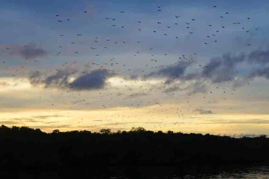 30 Reasons That Will Make You Desperate To Travel to Indonesia! - Flores Bats at Night