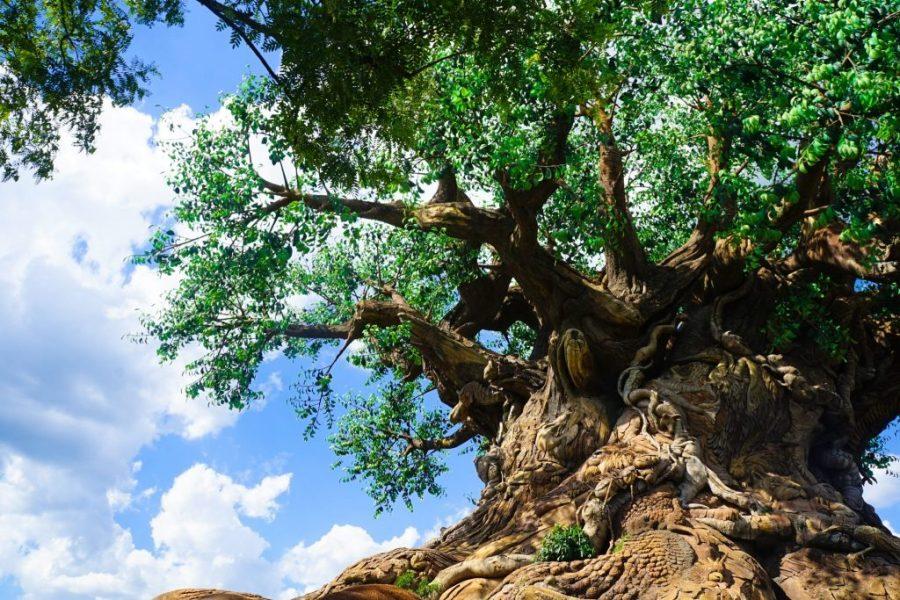 Which Disney World Park is Best? - Animal Kingdom?