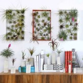 15+ Amazing Nature Decoration In Your Home With Beautiful Indoor Plants Idea 09