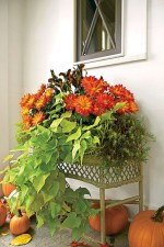 88+ Amazing Fall Container Gardening Ideas (16)
