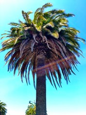 Palm Tree In San Francisco