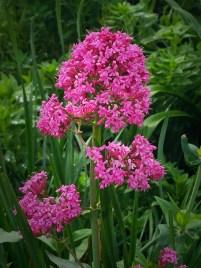 Monterey Spring Flowers