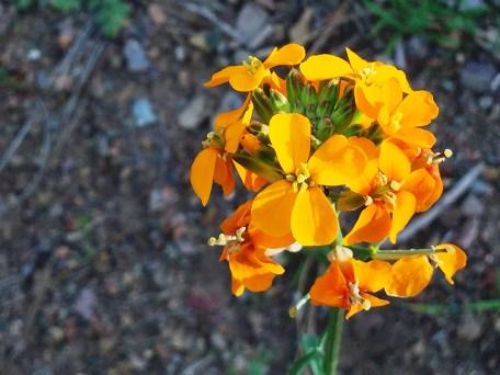 Pinnacles National Park Spring Wildflowers