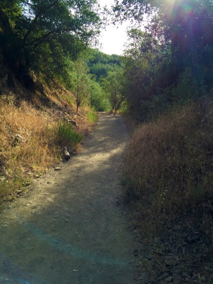 Easy Hike on The Canyon Creek Trail