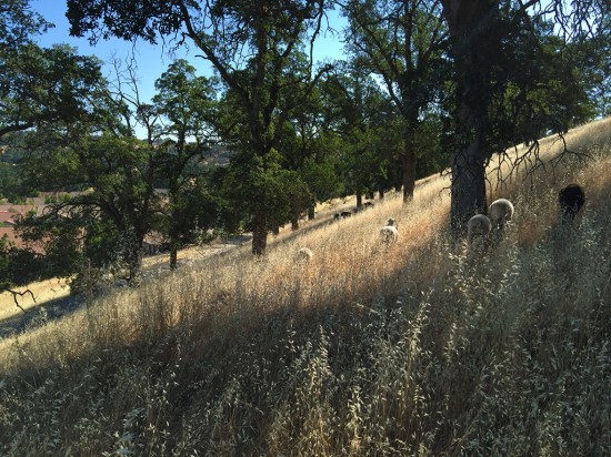 Hiking through Oak Trees in Rocklin California