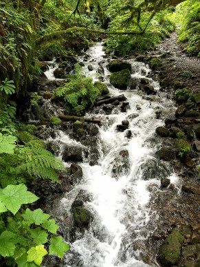 Wahkeena Creek Hike to Fairy Falls In The Columbia River Gorge