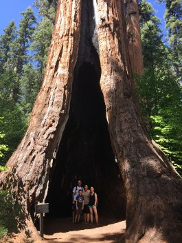 The Palace Hotel Giant Sequoia