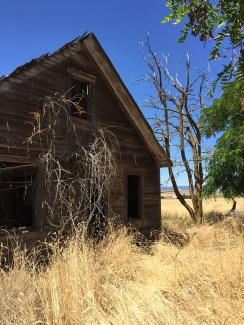 Old, Abandoned Farm Cabin